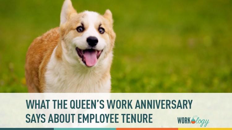 employee tenure, corgi