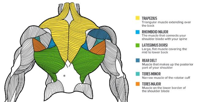 8 Very Important Tips To Improve Upper Back Mass – Gym Rat
