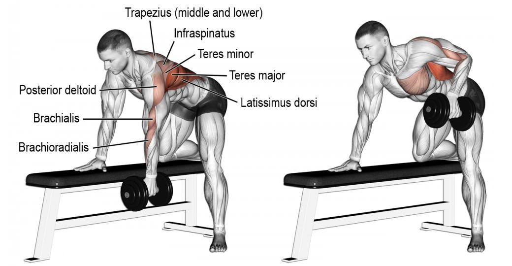 4-reasons-you-need-one-arm-dumbbell-row
