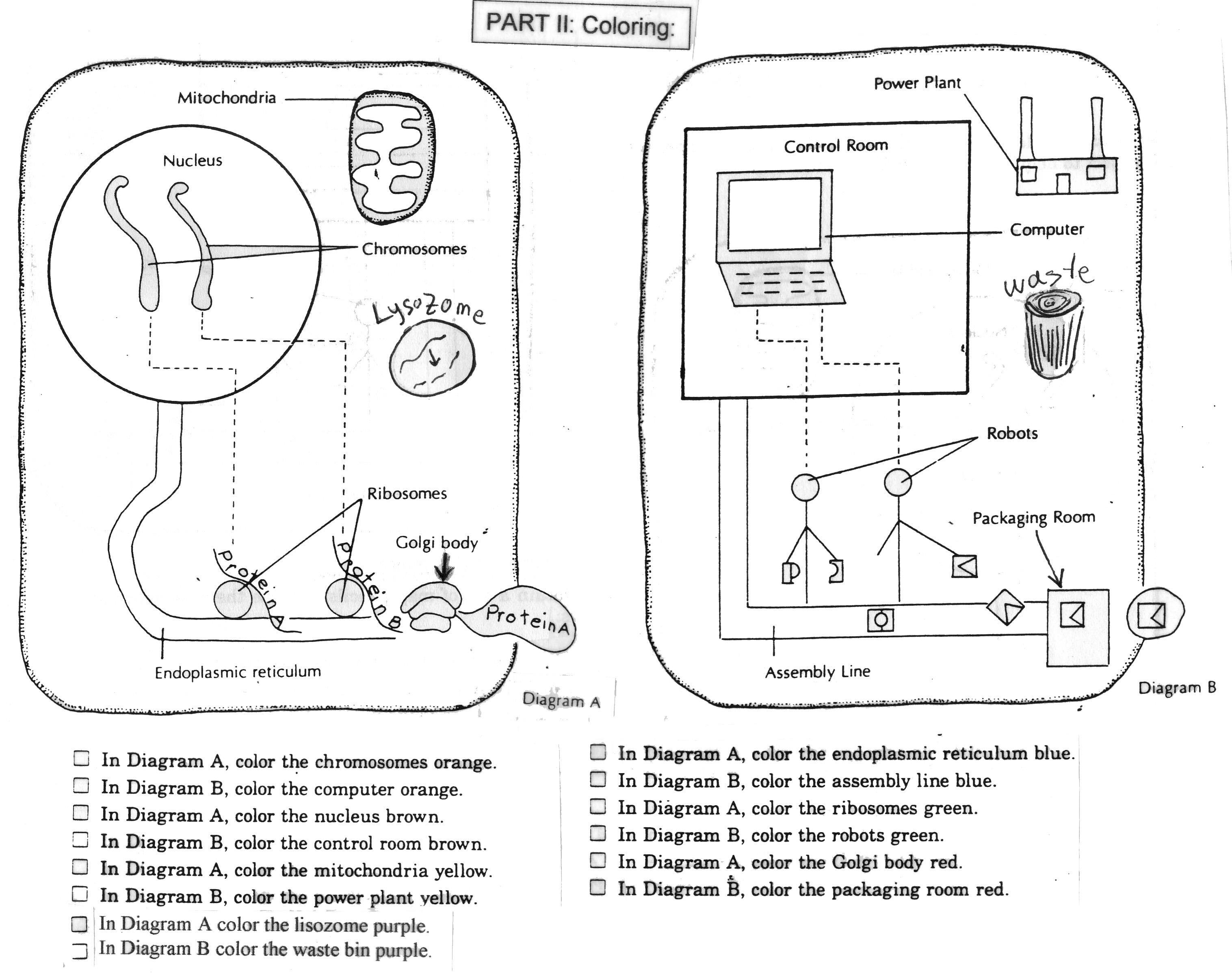 6 Best Images Of Life Science Eukaryotic Cells Worksheet