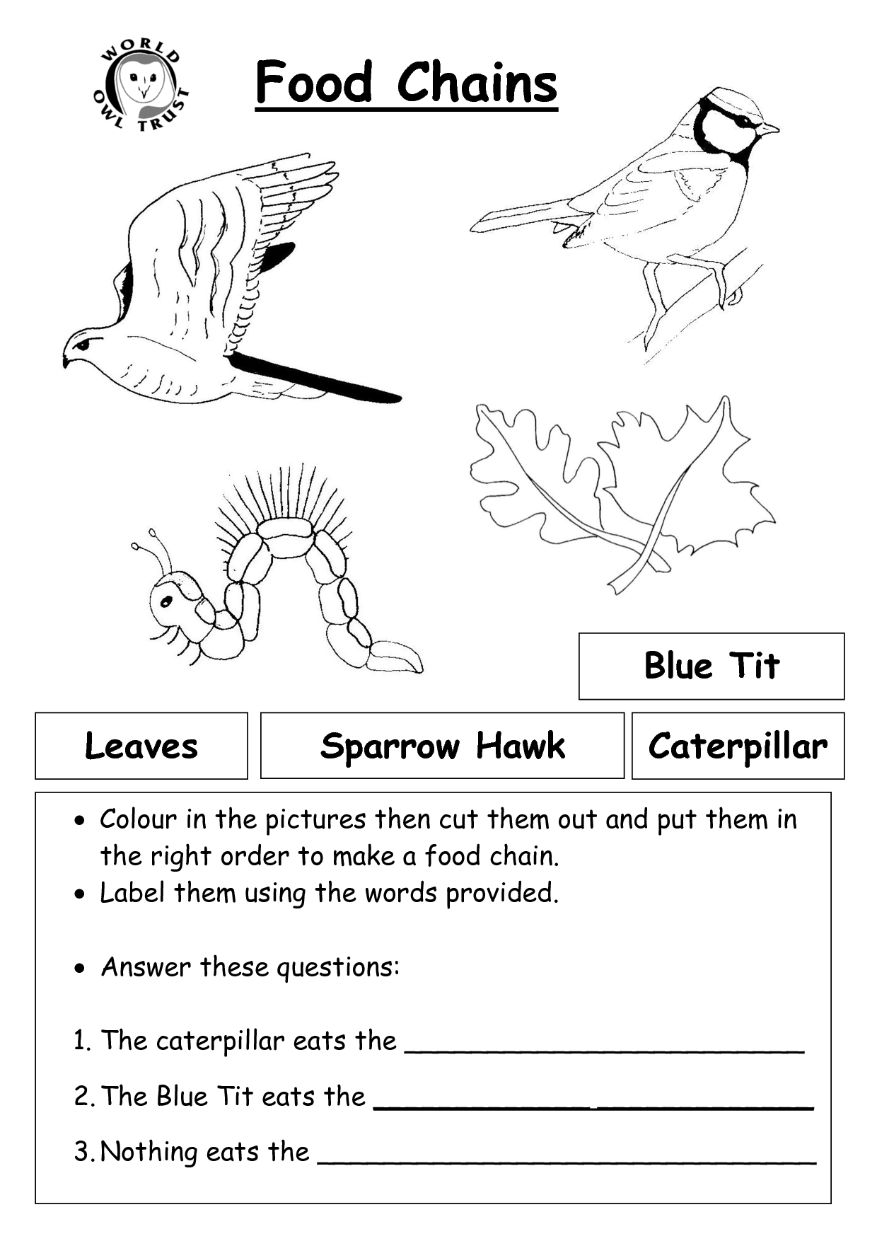 7 Best Images Of Food Web Worksheets High School