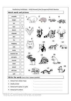 11 Best Images of Free 6th Grade Geography Worksheets