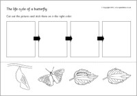 8 Best Images of Butterfly Life Cycle Ladybug Worksheet ...