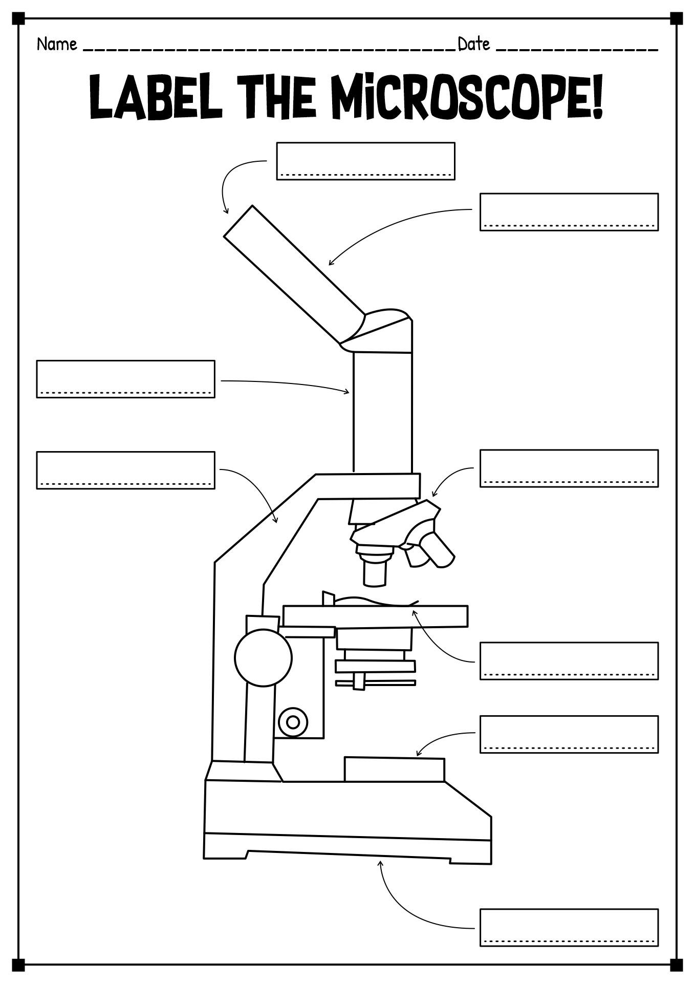 15 Best Images of Printable Microscope Worksheet