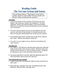 11 Best Images of Nervous System Worksheet Answers ...