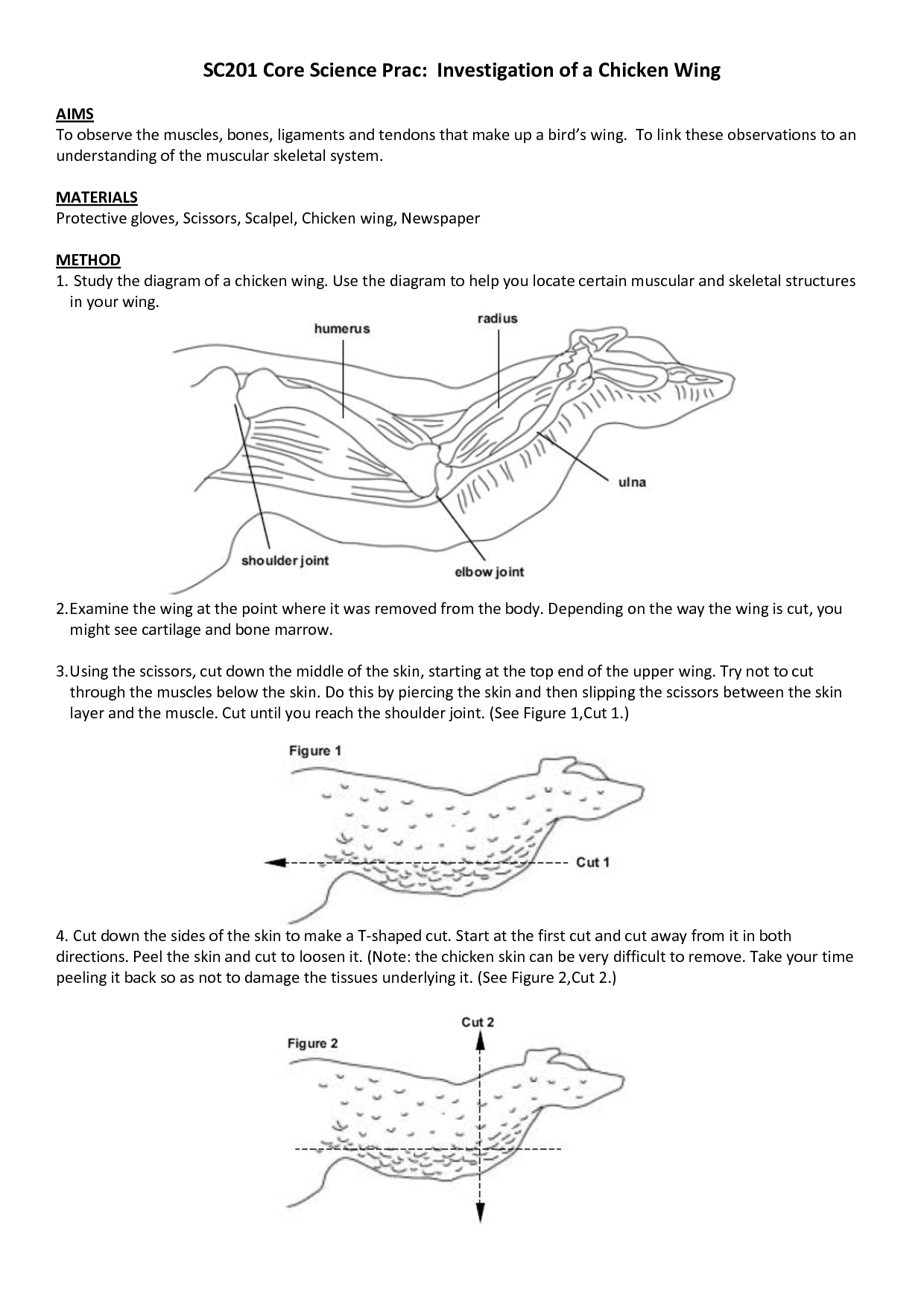 15 Best Images Of Anatomy Study Guide Worksheets