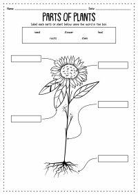13 Best Images of Animals Kindergarten Worksheet ...