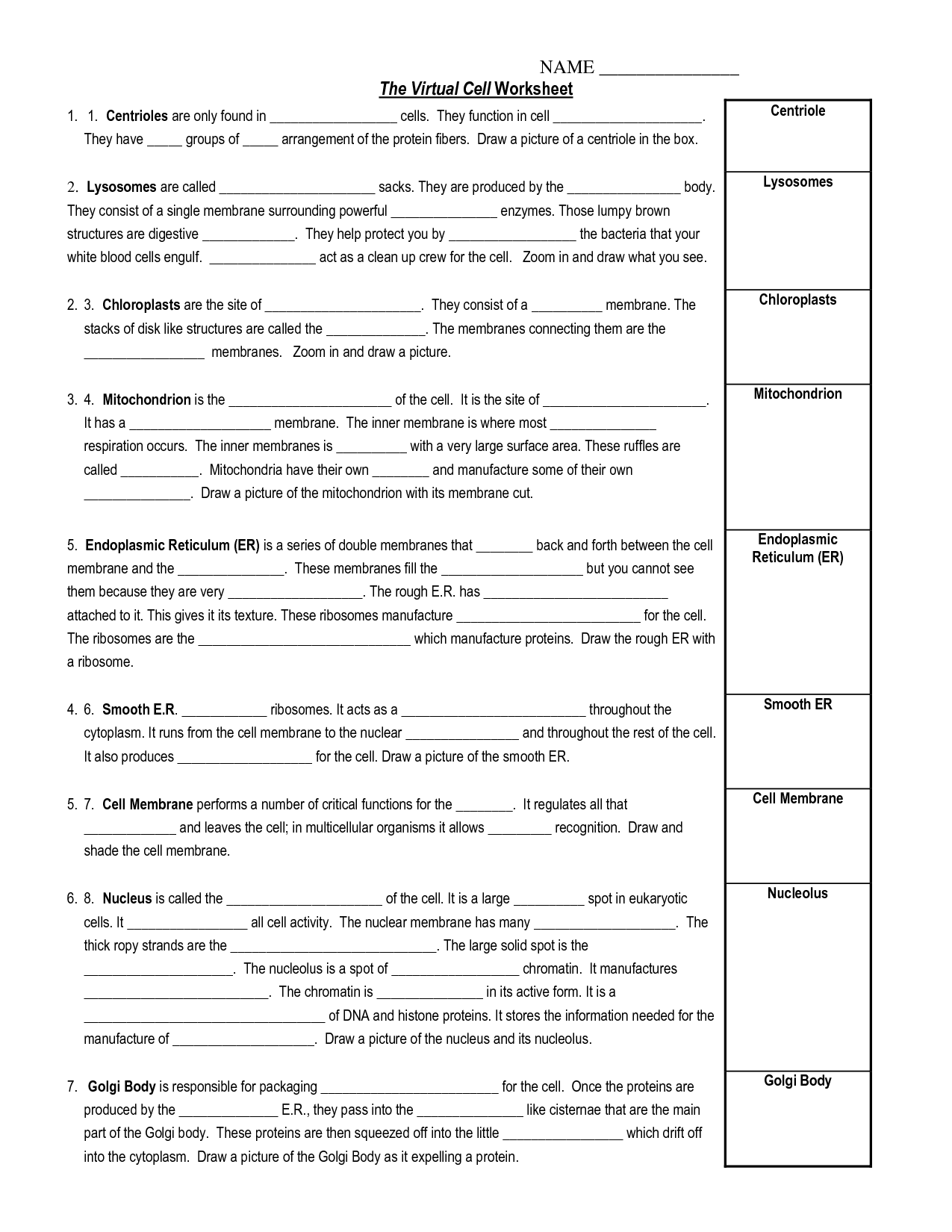 Membrane Structure Worksheet Answers