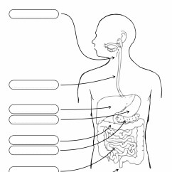 Large Intestine Diagram Blank Lx Torana Headlight Wiring 10 Best Images Of Unlabeled Digestive System