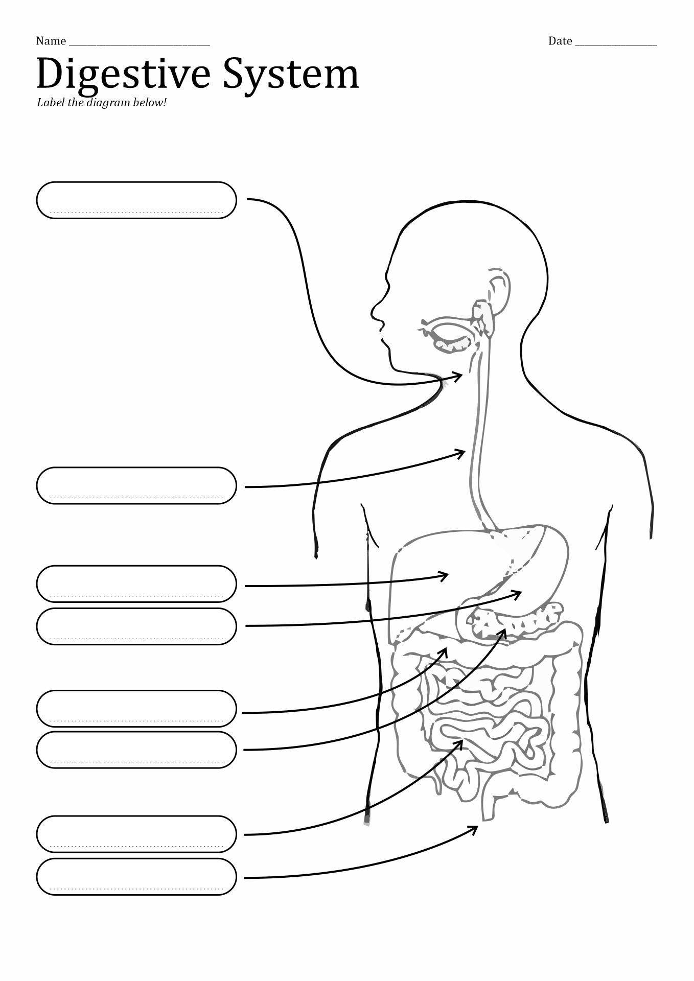 large intestine anatomy diagram labeled wiring for two switches to one light 10 best images of unlabeled digestive system