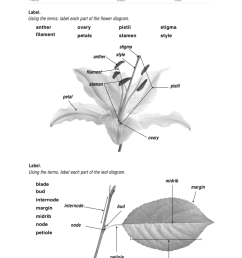 15 best images of parts of a plant worksheet 1st grade plant parts [ 791 x 1024 Pixel ]
