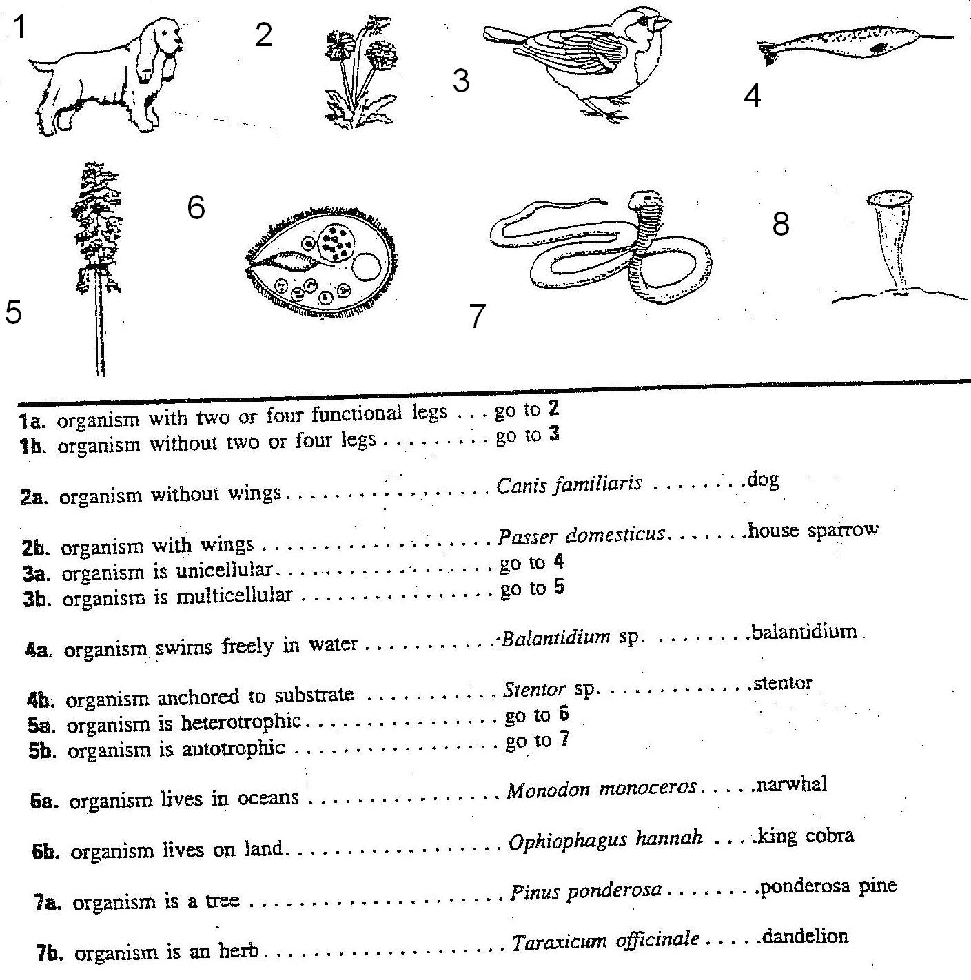 15 Best Images Of Cell Organelles Worksheet Middle School