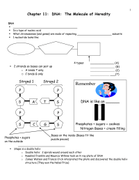 12 Best Images of DNA The Molecule Of Heredity Worksheet ...