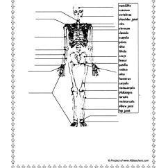 Skeletal Muscle Labeled Diagram Print Ford Capri Mk1 Wiring 9 Best Images Of Skeleton Bones Worksheet Free Printable