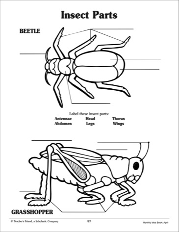 frog hopper zamperla wiring diagram