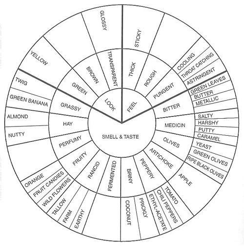 15 Best Images of Genetic Traits Wheel Worksheet