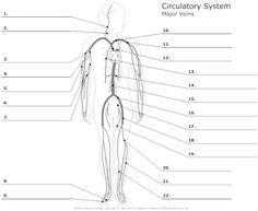 13 Best Images of Worksheets Human Anatomy Bones