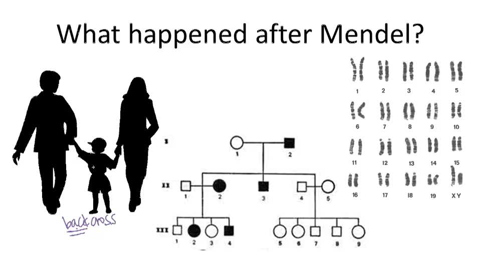 Non Mendelian Genetics Worksheet Answer Key / 15 Best