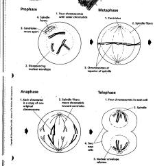 Mitosis Worksheet Diagram Guitar Wire 18 Best Images Of Notes Answers