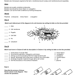 Virus Diagram Worksheet Wiring Diagrams For Three Way Switches 14 Best Images Of Viruses And Bacteria Worksheets