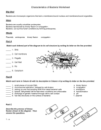 14 Best Images of Viruses And Bacteria Worksheets ...