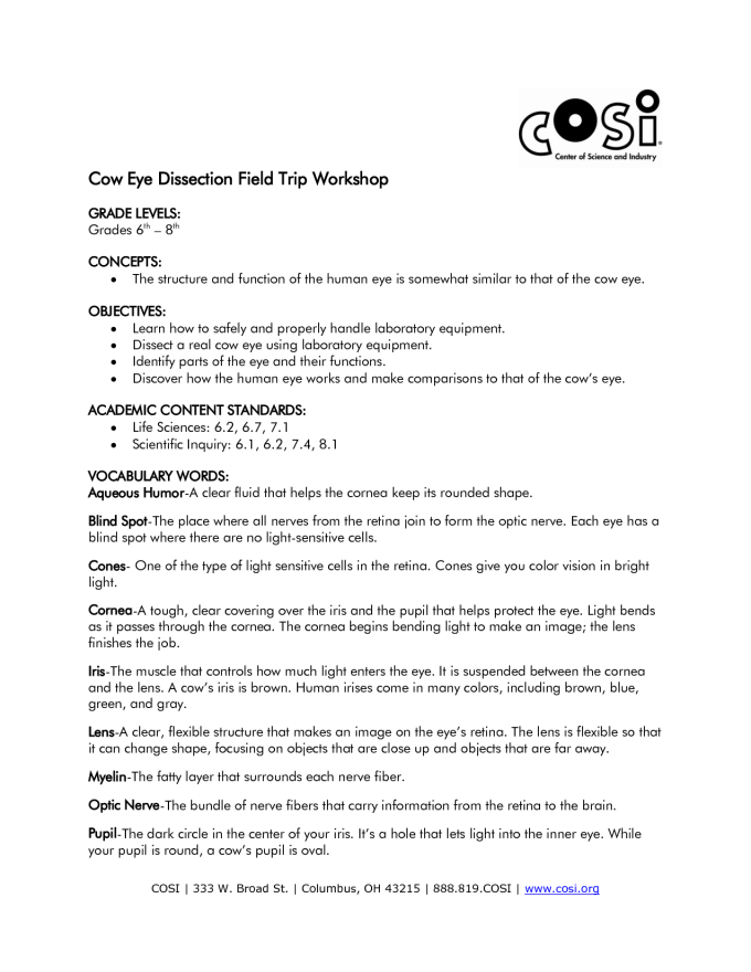 Cow Eye Dissection Worksheet Answer Key Photos Leafsea – Eye Dissection Worksheet