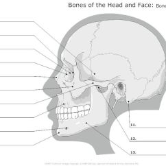 Bones Diagram Human Face Bathroom Exhaust Fan With Light Wiring 14 Best Images Of Anatomy Labeling Worksheets - Blank Head And Neck Muscles ...
