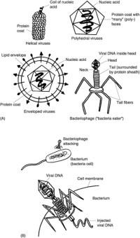 Bacteria Coloring Worksheet Sketch Coloring Page