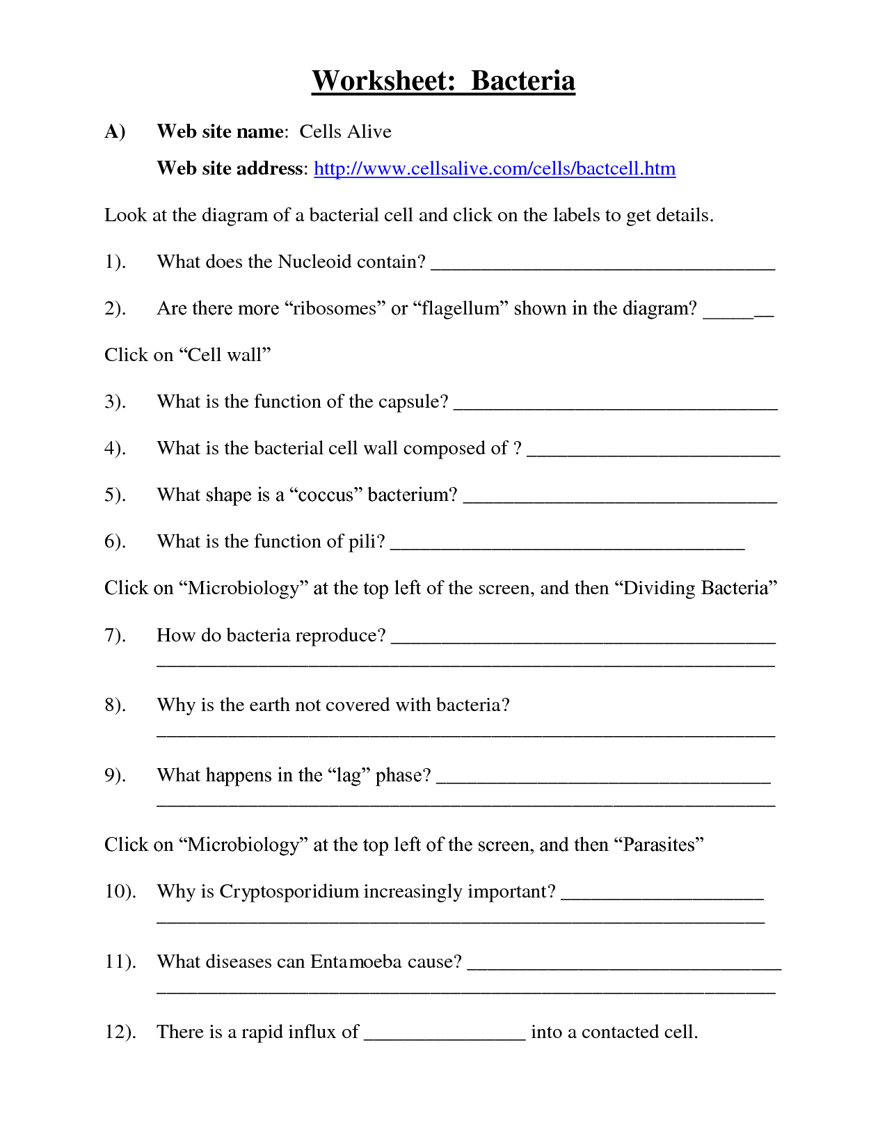 Protists And Bacteria Worksheet