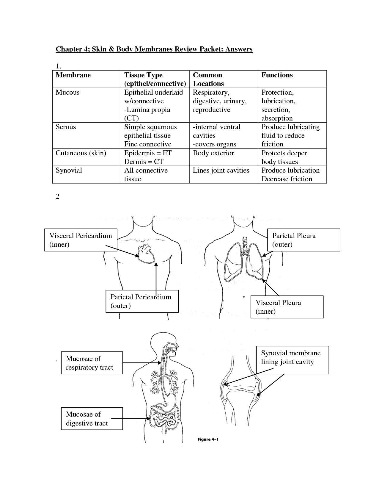 9 Best Images Of Anatomy Review Worksheet