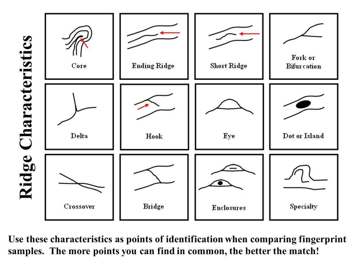 15 Best Images Of Fingerprint Identification Worksheet