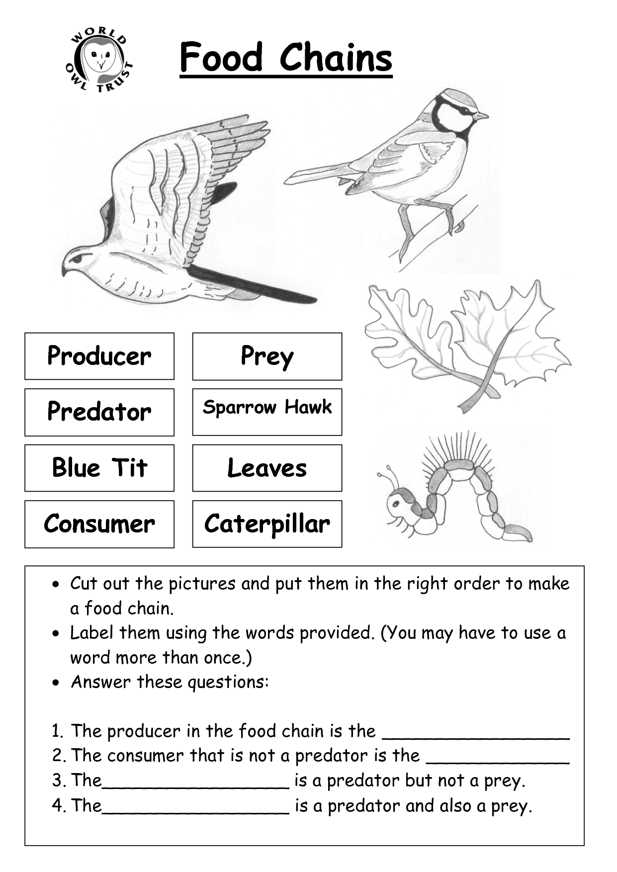 11 Best Images Of Food Chain Blank Worksheet