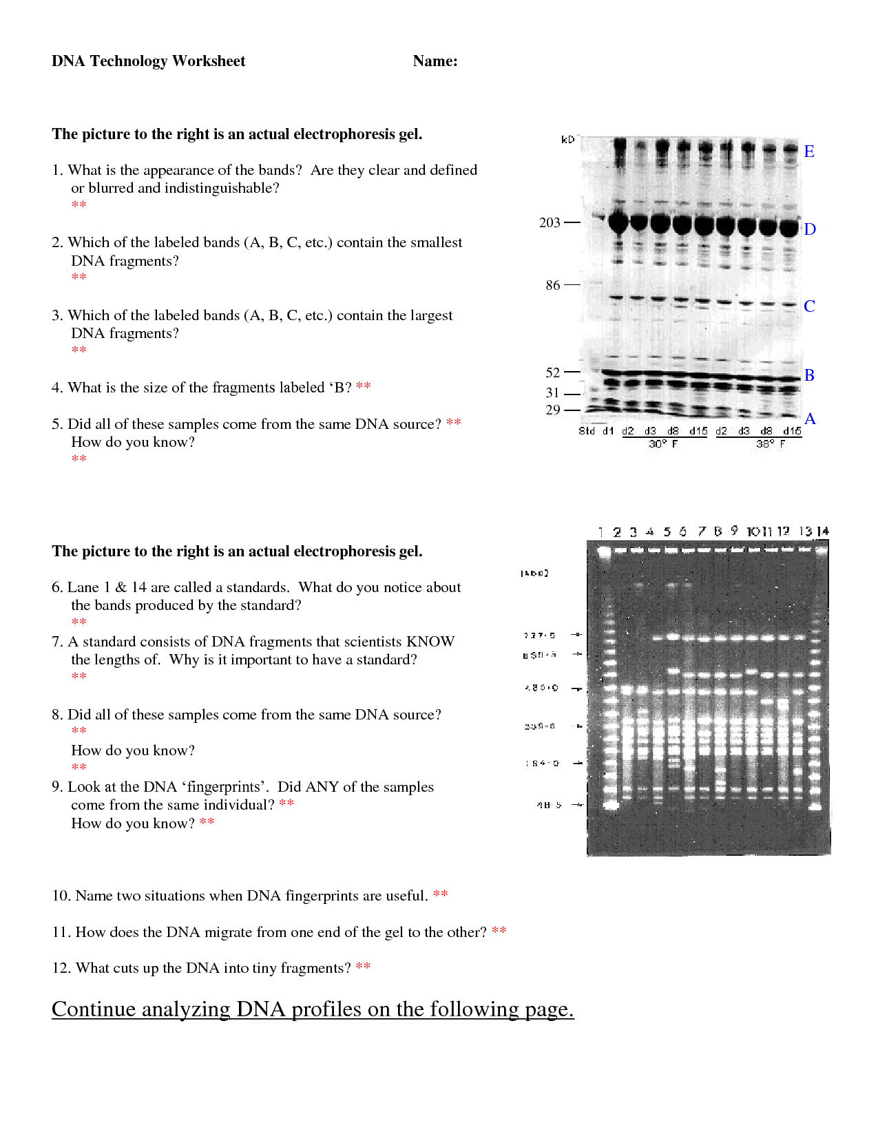 10 Best Images Of Dna Fingerprinting Biology Worksheet
