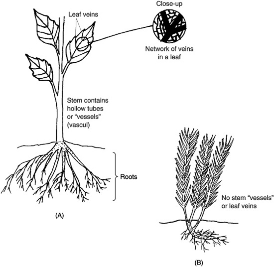 9 Best Images of Types Of Plant Roots Worksheet