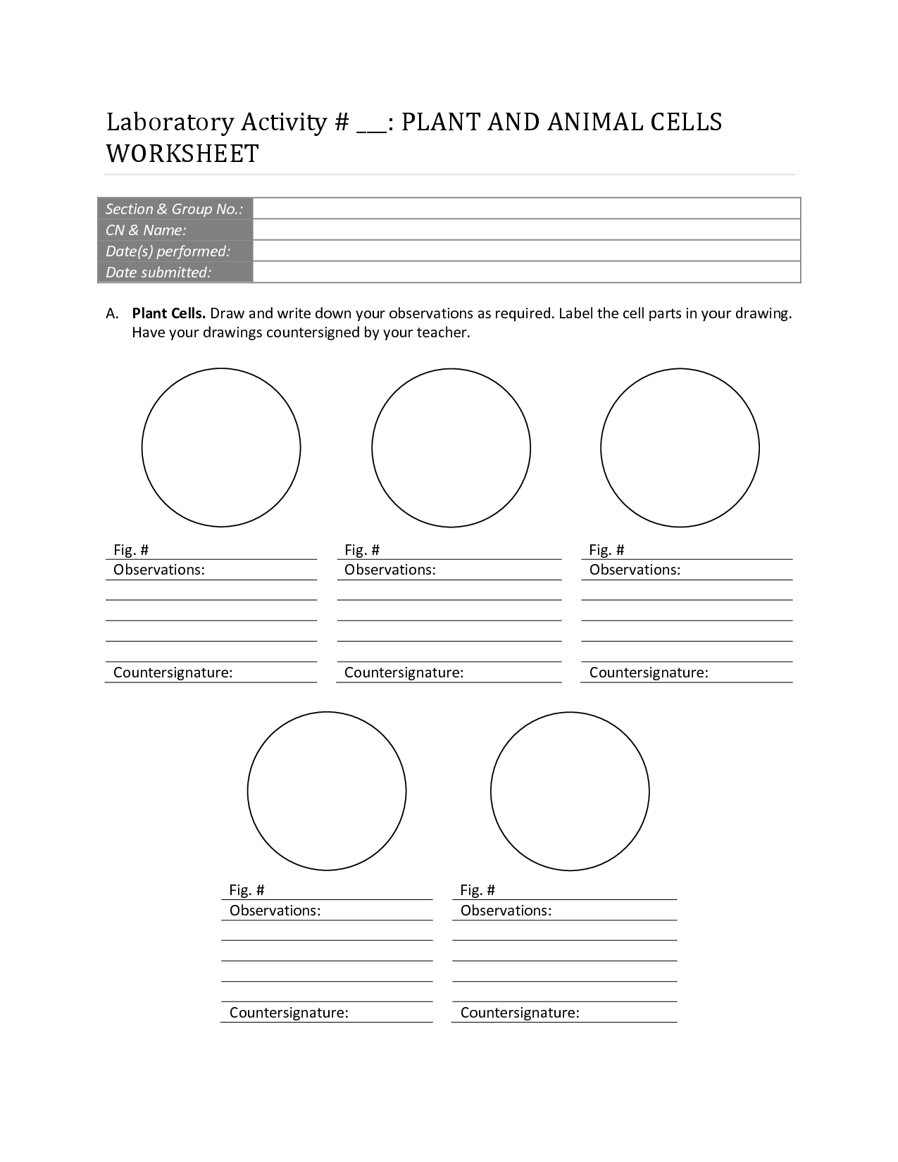 14 Best Images Of Plant Cell Worksheet