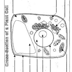 Plant And Animal Cell Diagram Worksheet Light Switch Timer Wiring 14 Best Images Of - Worksheet, ...