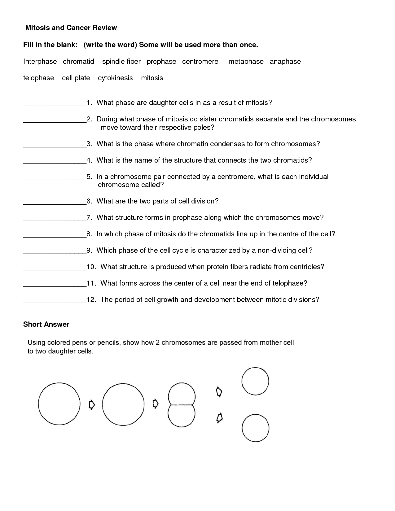 15 Best Images Of Phases Of Mitosis Worksheet Answers