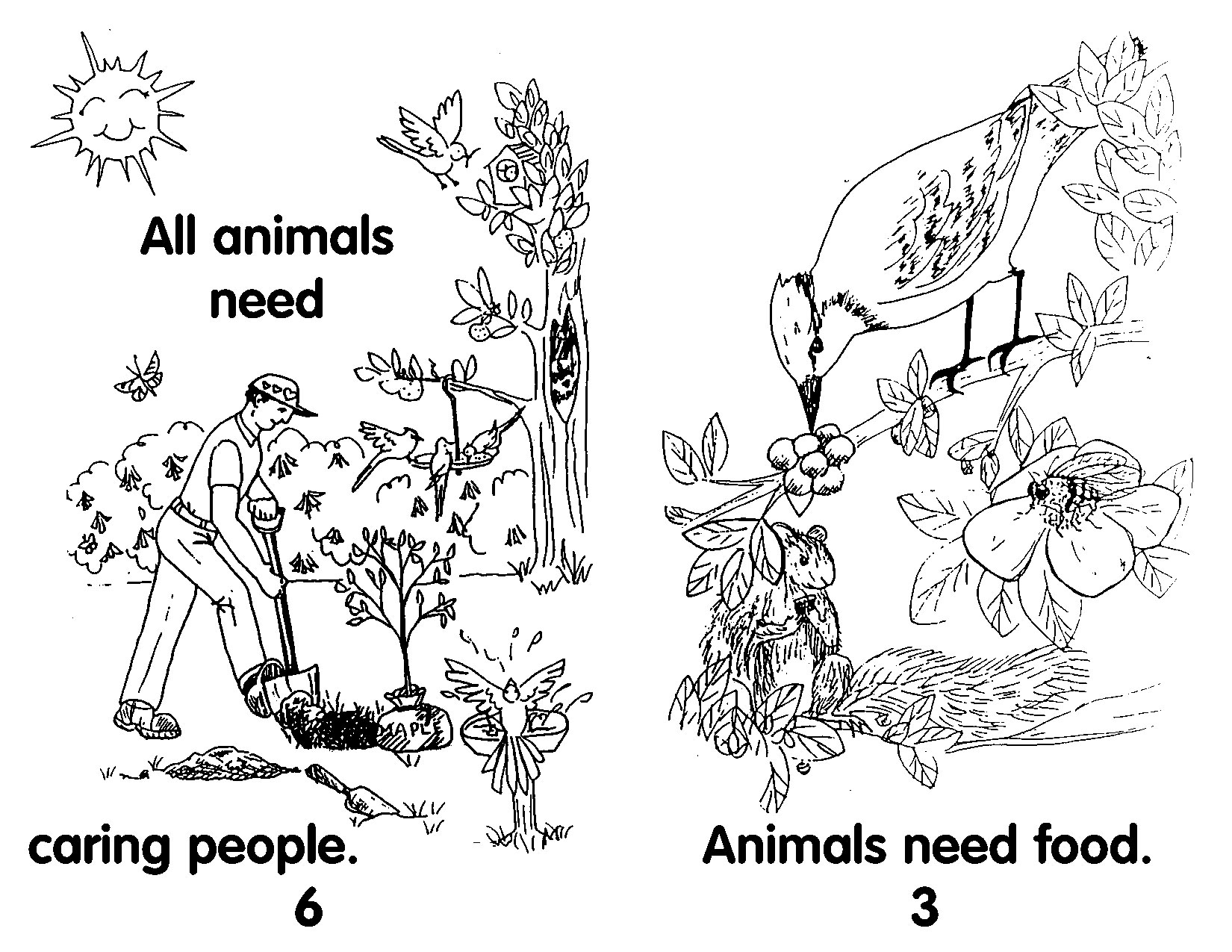 Needs Of Living Things Worksheet