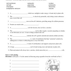 Plant And Animal Cell Diagram Quiz 1990 Ford F150 Starter Solenoid Wiring 13 Best Images Of Function Organelles Worksheet