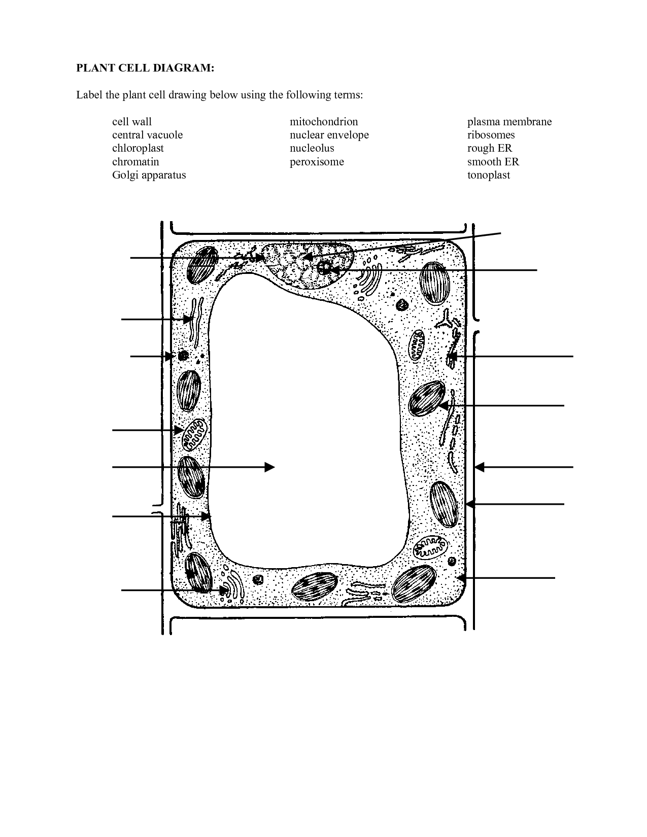 16 Best Images Of Plant Cell Parts Worksheet