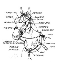 Parts Of A Blank Horse Diagram E38 Dsp Wiring 9 Best Images Labeling Worksheet Harness