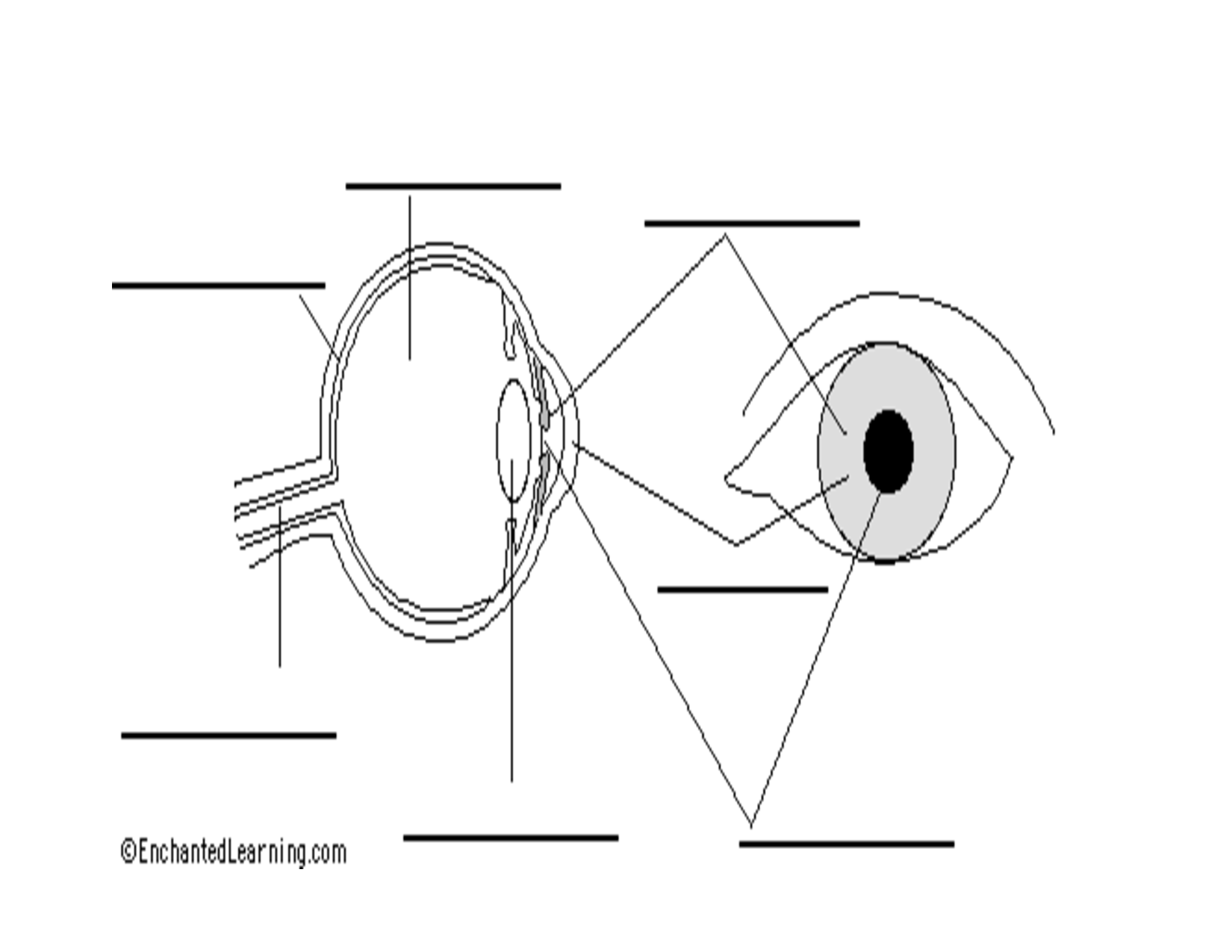 Label The Eye Diagram Quiz