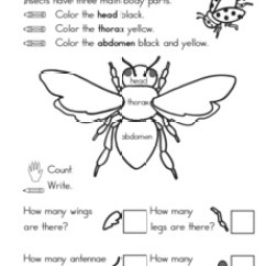 Ant Parts Diagram Emg Wiring Diagrams 15 Best Images Of An Worksheet - Body Worksheet, Life Cycle ...