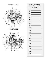 15 Best Images of Chapter 9 Cellular Respiration Worksheet