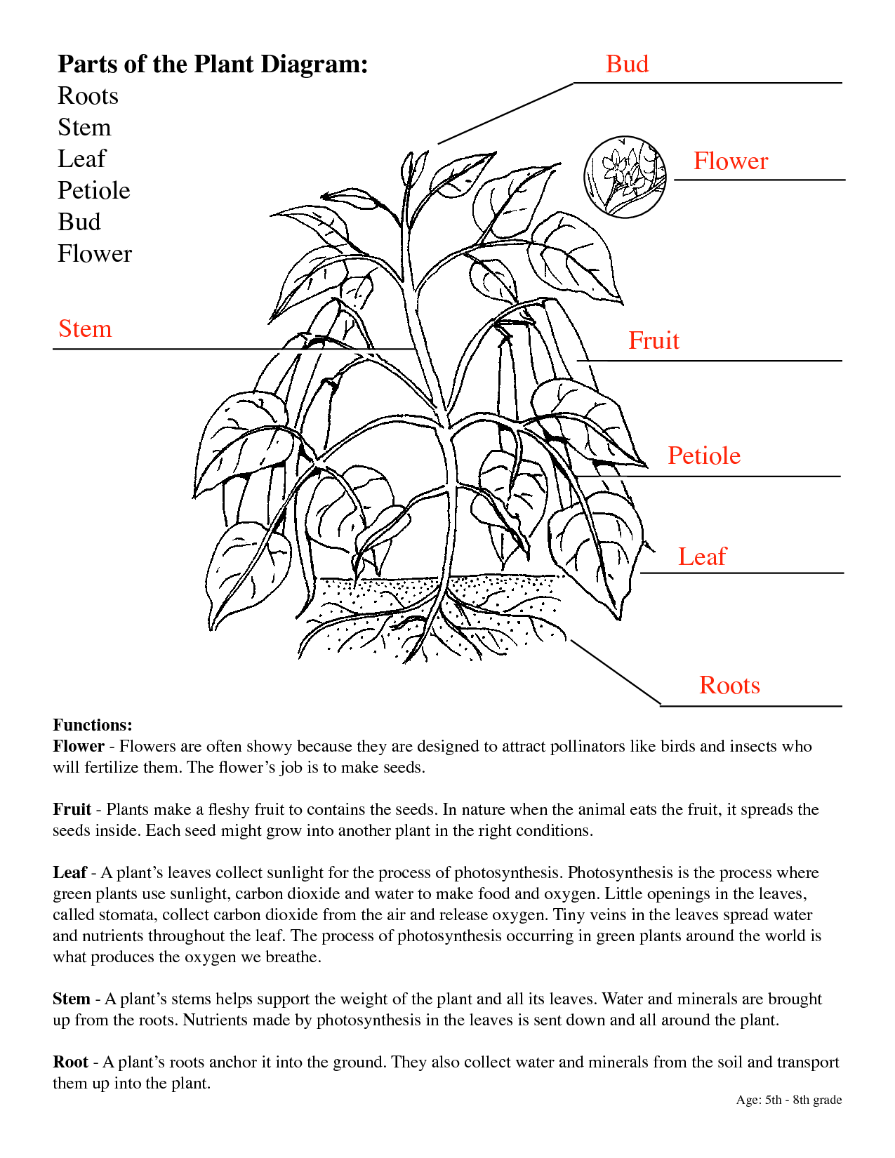 5 Best Images Of Parts Of A Flowering Plant Worksheet
