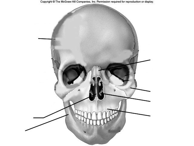 arm muscles anatomy diagram blank venn template word 13 best images of unlabeled skeleton worksheet - skeletal system worksheet, skull facial ...
