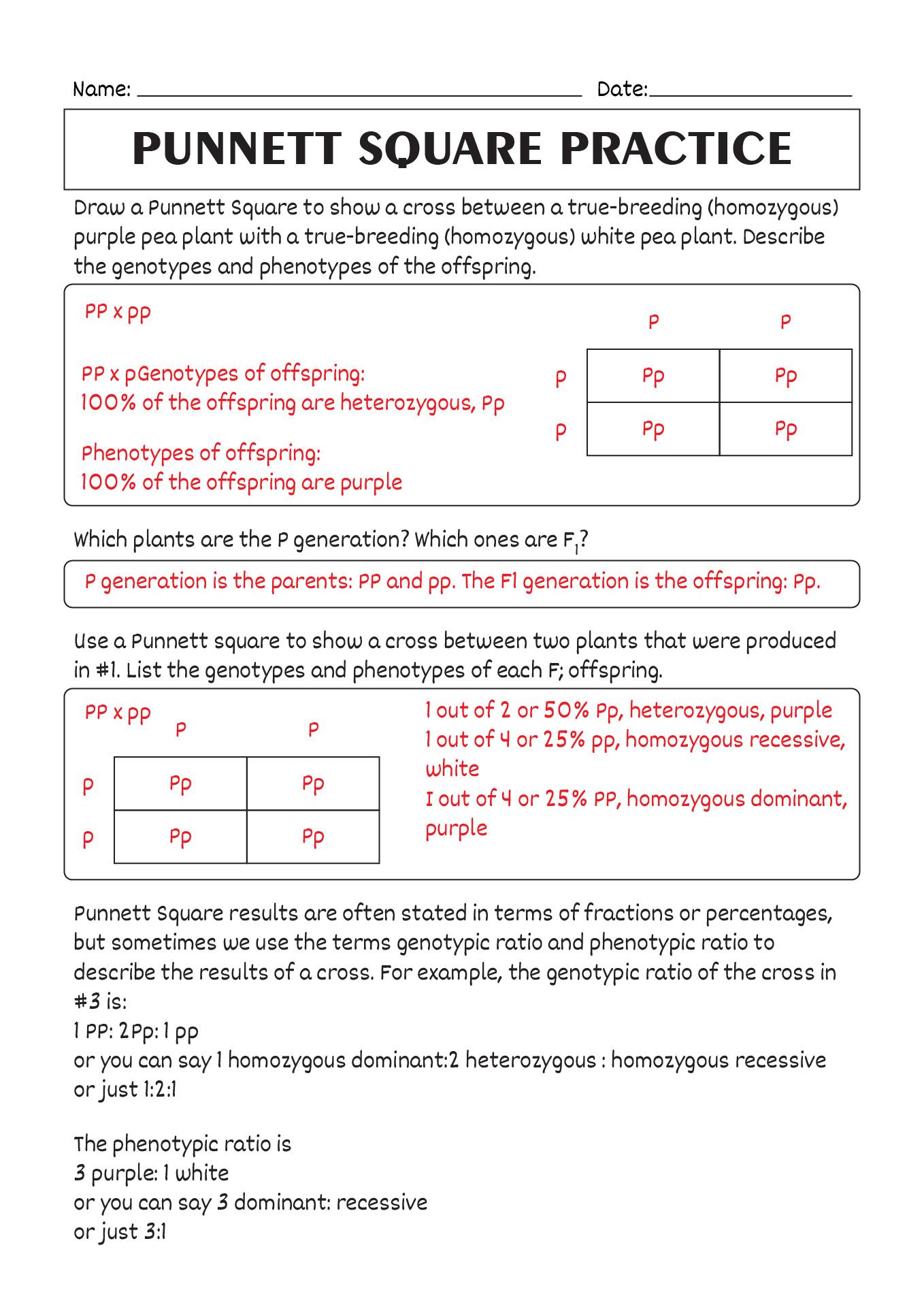 10 Best Images Of Printable Worksheet Of Squares