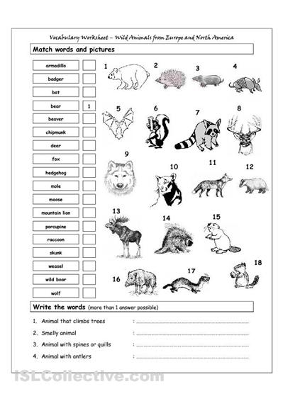 9 Best Images of Free Printable Animal Homes Worksheet