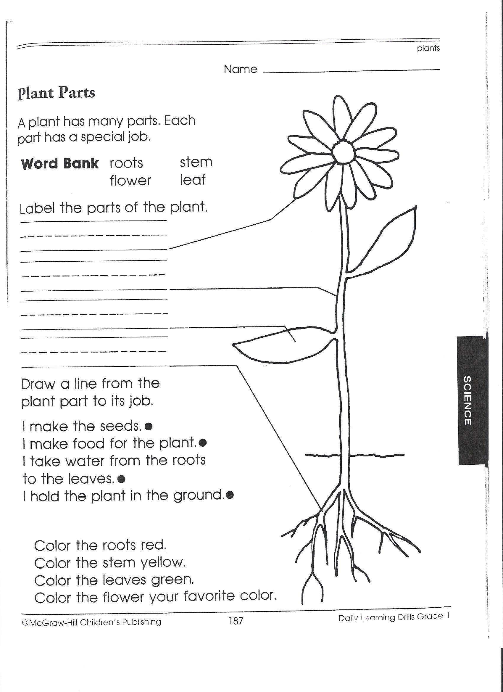 Leaves Stems And Roots Worksheet