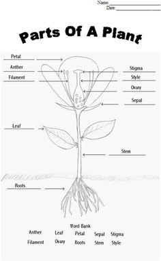14 Best Images of Parts Of A Plant Worksheet First Grade